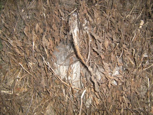arbremort.jpg
