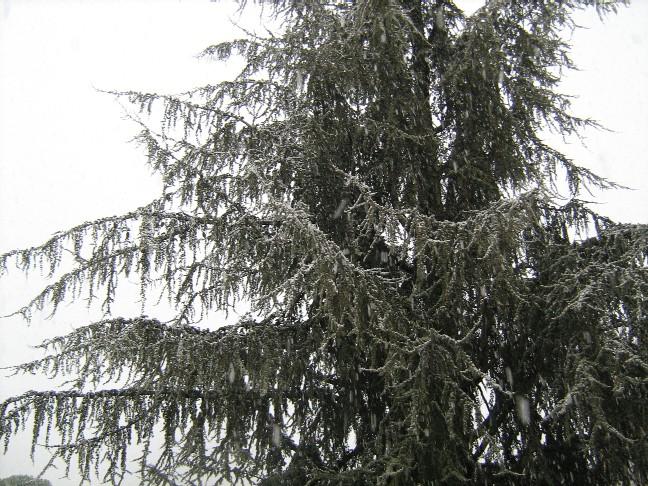 neige003.jpg