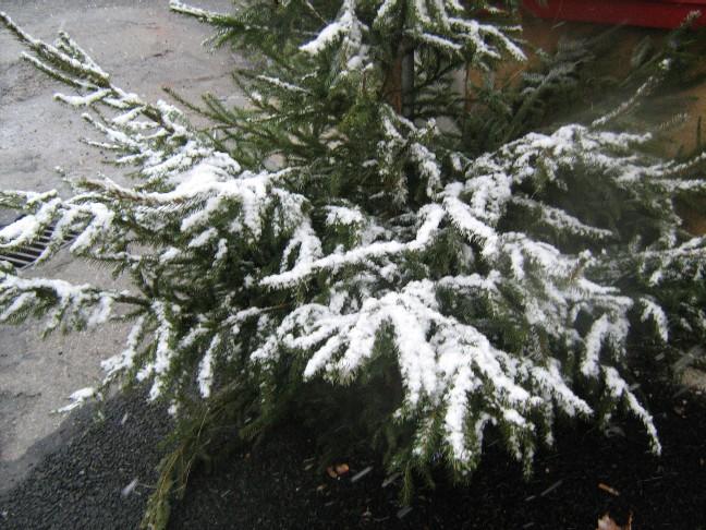 neige013.jpg