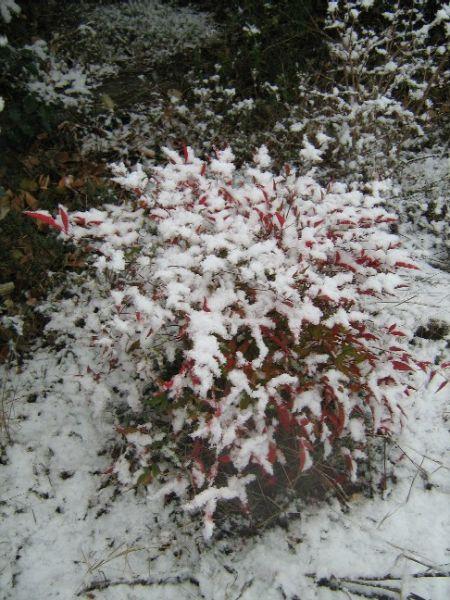 neige023.jpg
