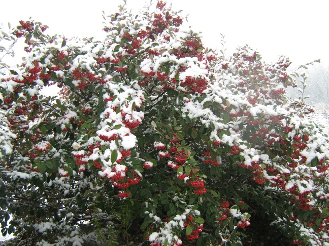 neige0241.jpg