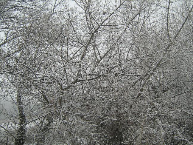 neige0261.jpg