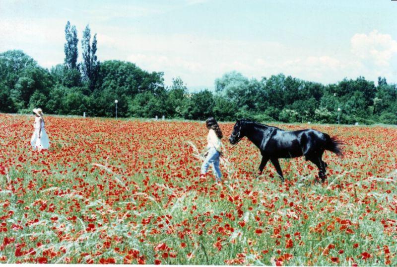 chevalnoir2.jpg